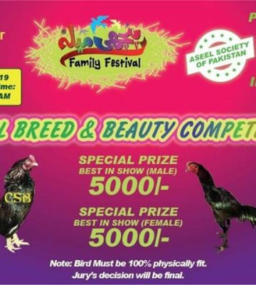 Aseel Beauty Contest