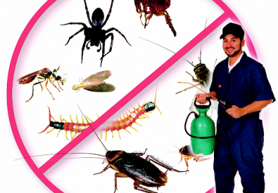 J.K Fumigation   Pest Control Services in Karachi