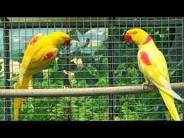 Pets And Birds Marke...