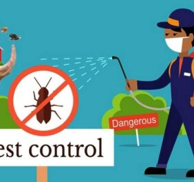 The Global Services   Pest Control Services in Rawalpindi