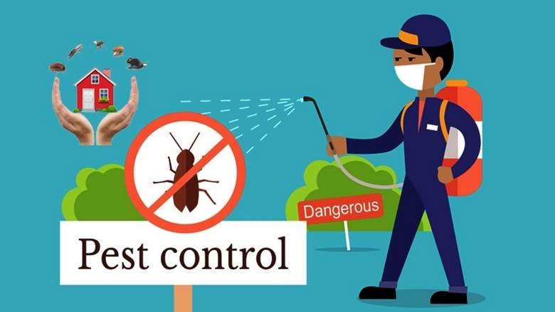 The Global Services | Pest Control Services in Rawalpindi | CityBook.Pk