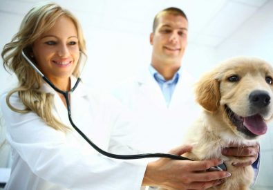 Pets & Vets   Pets Hospitals In Islamabad
