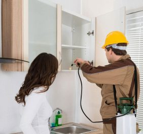 Scout Pest Control Services in Islamabad