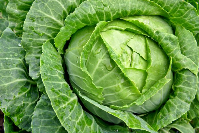 Cabbage Zero Calorie Foods for Weight Loss