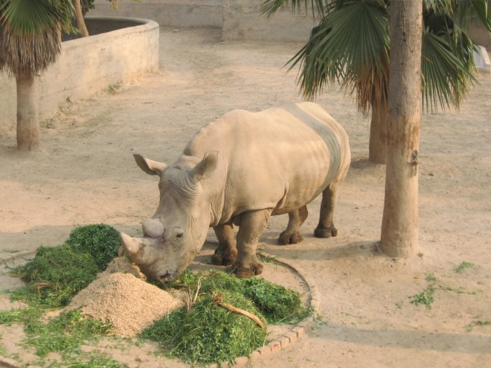 Lahore Zoo places to visit in pakistan