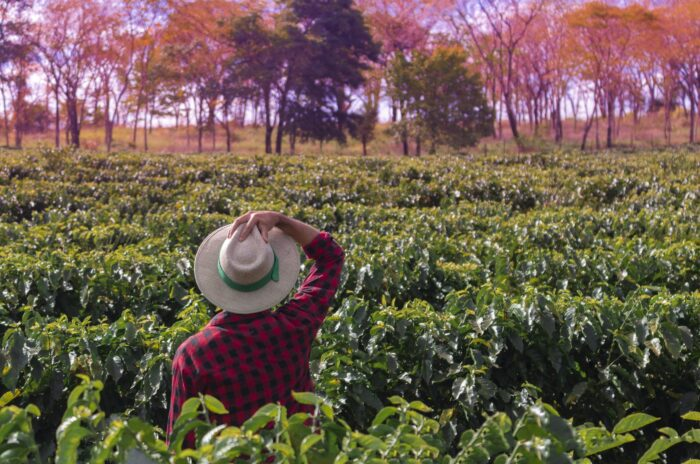 Where do specialty coffees come from?